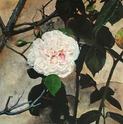 """""""Rosa antica"""""""