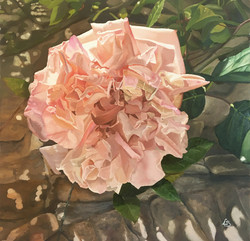 """Rosa antica rosa"""