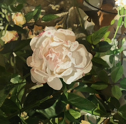 """""""Rosa antica bianca"""""""