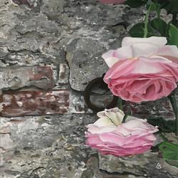 """Rose antiche"""