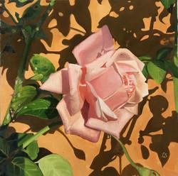 """Rosa antica rosa, fondo Siena"""