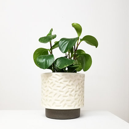 White Carved Plant Pot: Large