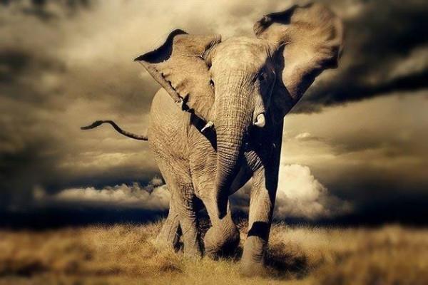 слоны и веревки