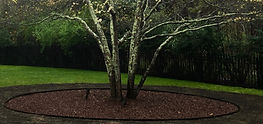Proper Mulch Dogwood East Hampton New York