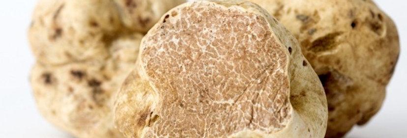 Wildcrafted White Truffles (Tuber Magnatum pico.)