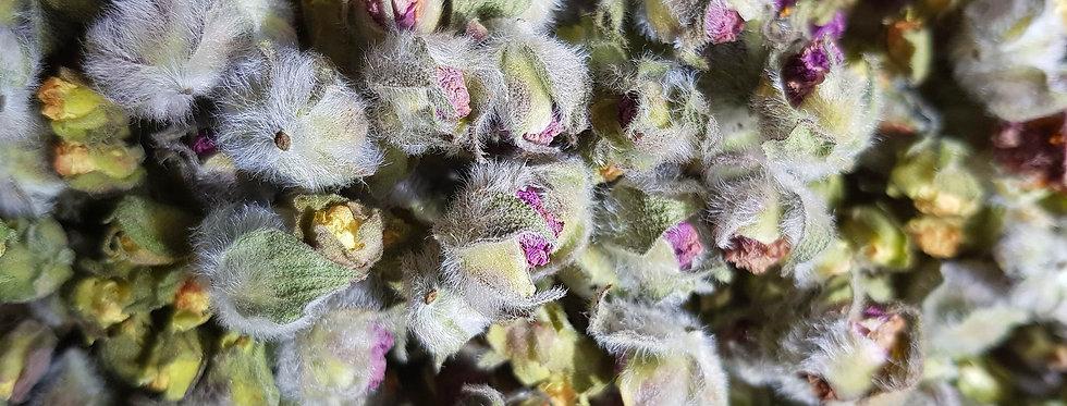Wild Cistus Incanus / Cistus Creticus Buds 20gr.