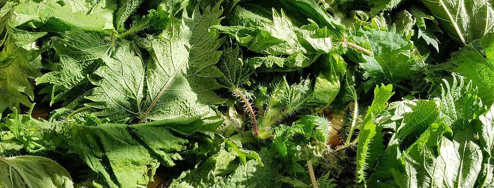 Wild Stinging Nettle Tincture (Urtica dioica) 30ml