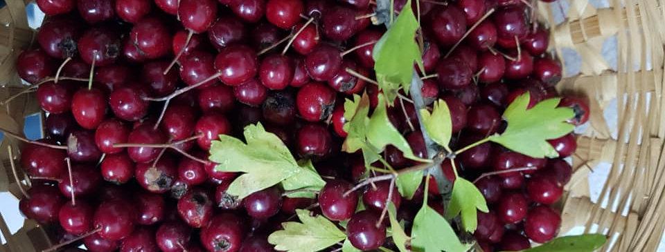 Wild Red Hawthorn Berries Tincture 30ml (Crataegus laevigata)