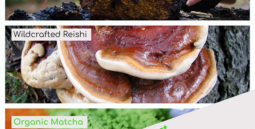 Chaga, Reishi & Matcha Tincture 30ml