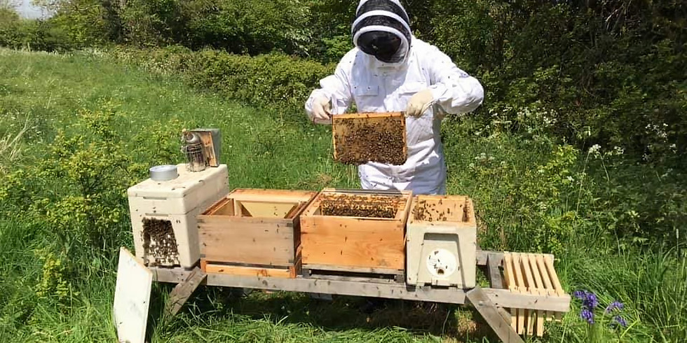 A Day As A Beekeeper 3