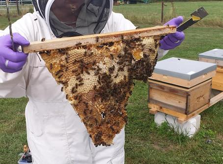 The Bee Rent