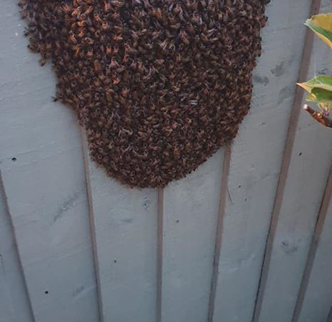 A swarm on a fence