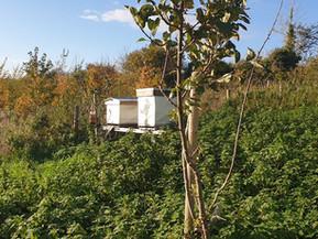 The apiary in Upton-Cheyney