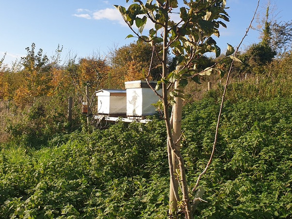 The apiary in Upton-Cheyney
