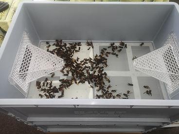 trap full.jpg