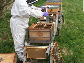 The apiary in Avebury