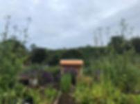 tbh garden.jpg