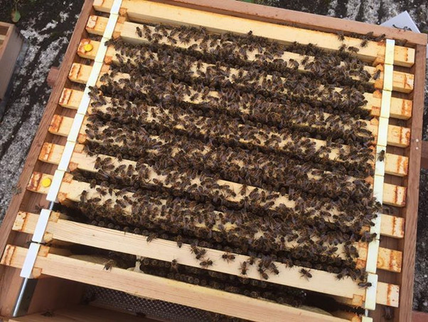 9 frames of bees and 6 of brood