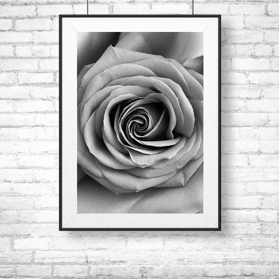 Black and White Rose Framed Wall Art