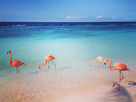 Shooting in der Karibik