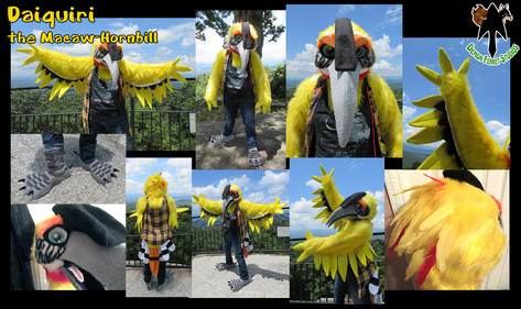 Daiquiri the Macaw-Hornbill
