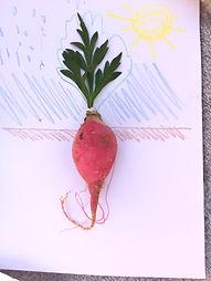 growing food illustration.jpg