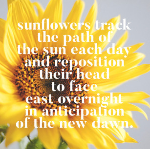 Sent with sunflower seeds