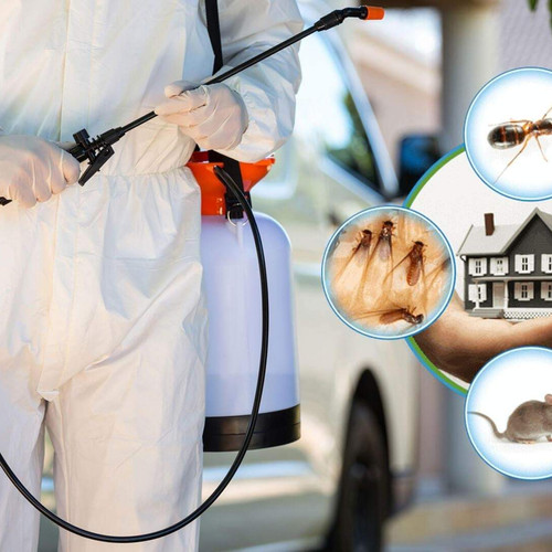 Pest Control Service in Ho Chi Minh