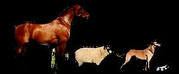 Logo Tierarztpraxis Baumann