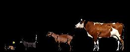 Logo Tierarztpraxis Baumann(2)