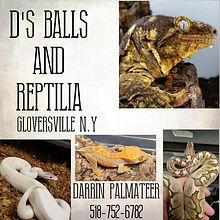 d's balls and reptilia.jpg