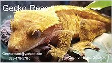 gecko resort.jpg