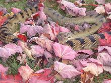 smart snakes.jpg