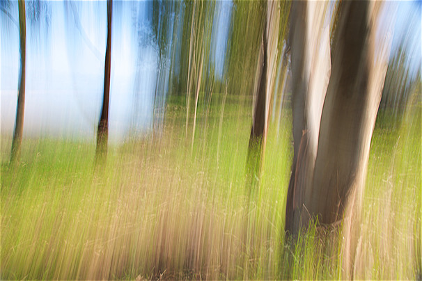 Tree Waves II