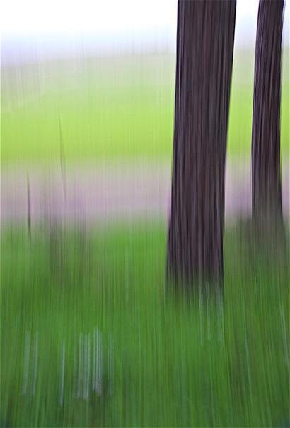 Tree Waves IV