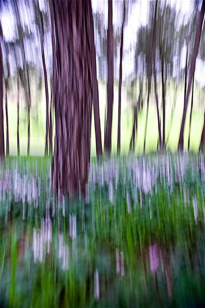 Tree Waves V