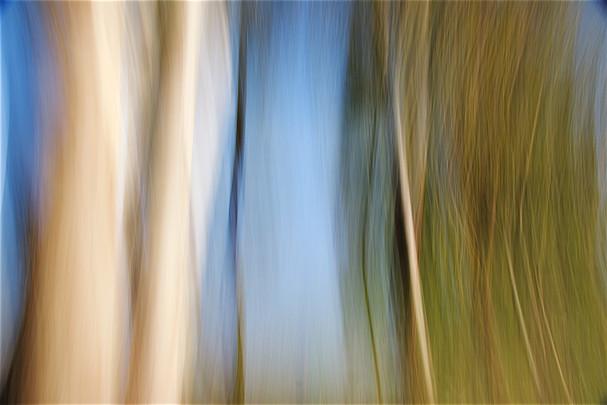 Tree Waves III