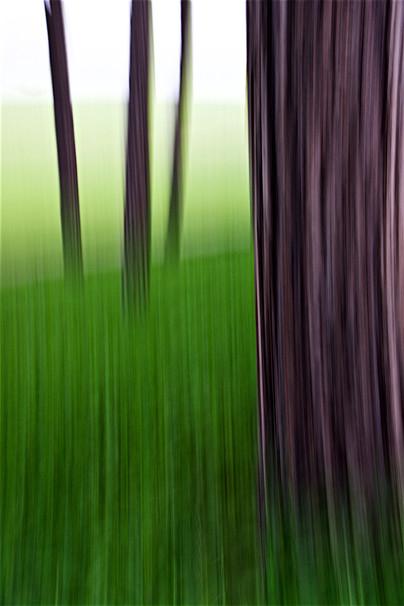 Tree Waves VI