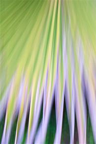 Palm cascade II