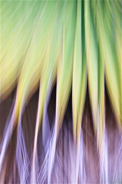 Palm cascade VI