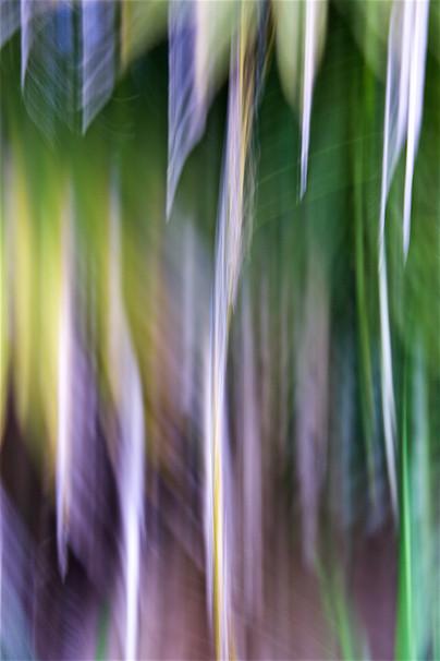Palm Cascade I