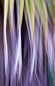 Palm cascade III
