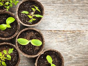 Zet je huis en tuin in de bloemetjes