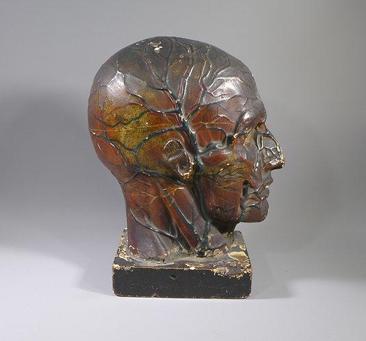 Rare Antique English Plaster Medical Model Cranium and Brain Signed #1