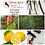 Thumbnail: Kit de Aceites Esenciales