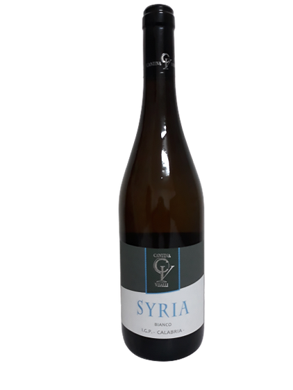 Syria_borgognotta vino bianco igp calabria