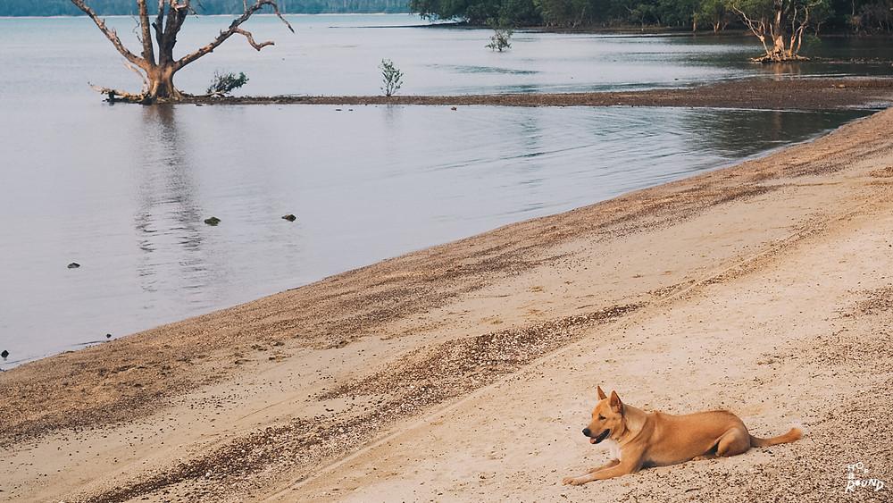 แม้แต่น้องหมาก็ชอบนั่งชิลริมทะเลเหมือนกัน