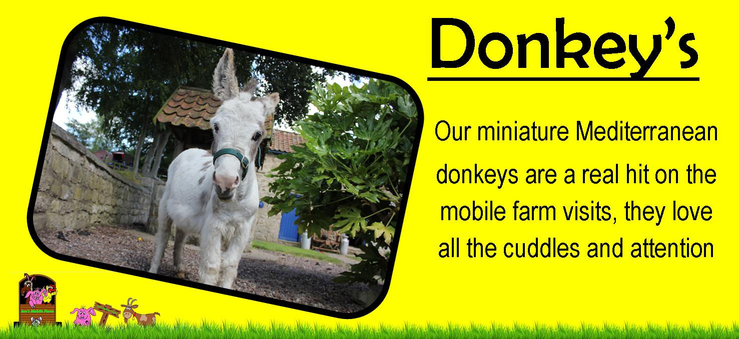 Ians farm Miniature mediterranean donkeys are a real hit on our mobile petting farm,yorkshire pettin