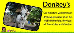 Ians farm Miniature mediterranean donkeys are a real hit on our mobile petting farm,yorkshire pettin