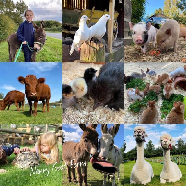 nanny goat farm 3v.jpg